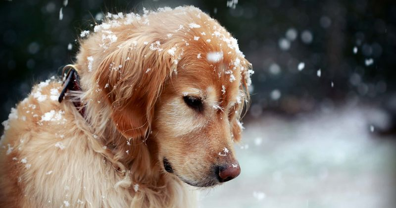 You can now get jail time for leaving your dog out in the cold snow, thanks to a new law